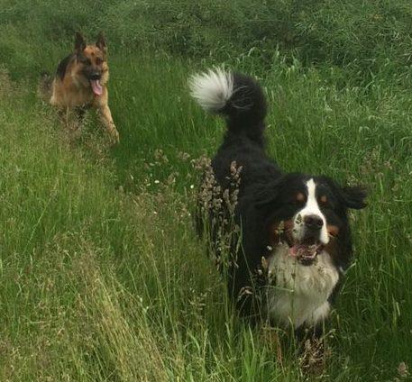 Balades chiens en pleine nature
